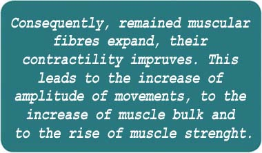 Consequently, remained muscular fibers expand, their contractility improves. This leads to the increase of amplitude of movements, to the increase of muscle bulk and to the rise of muscle strength